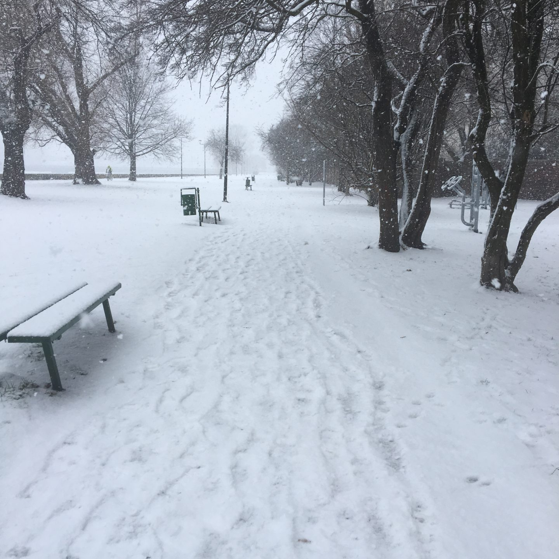 A Snowy Sunday Stroll